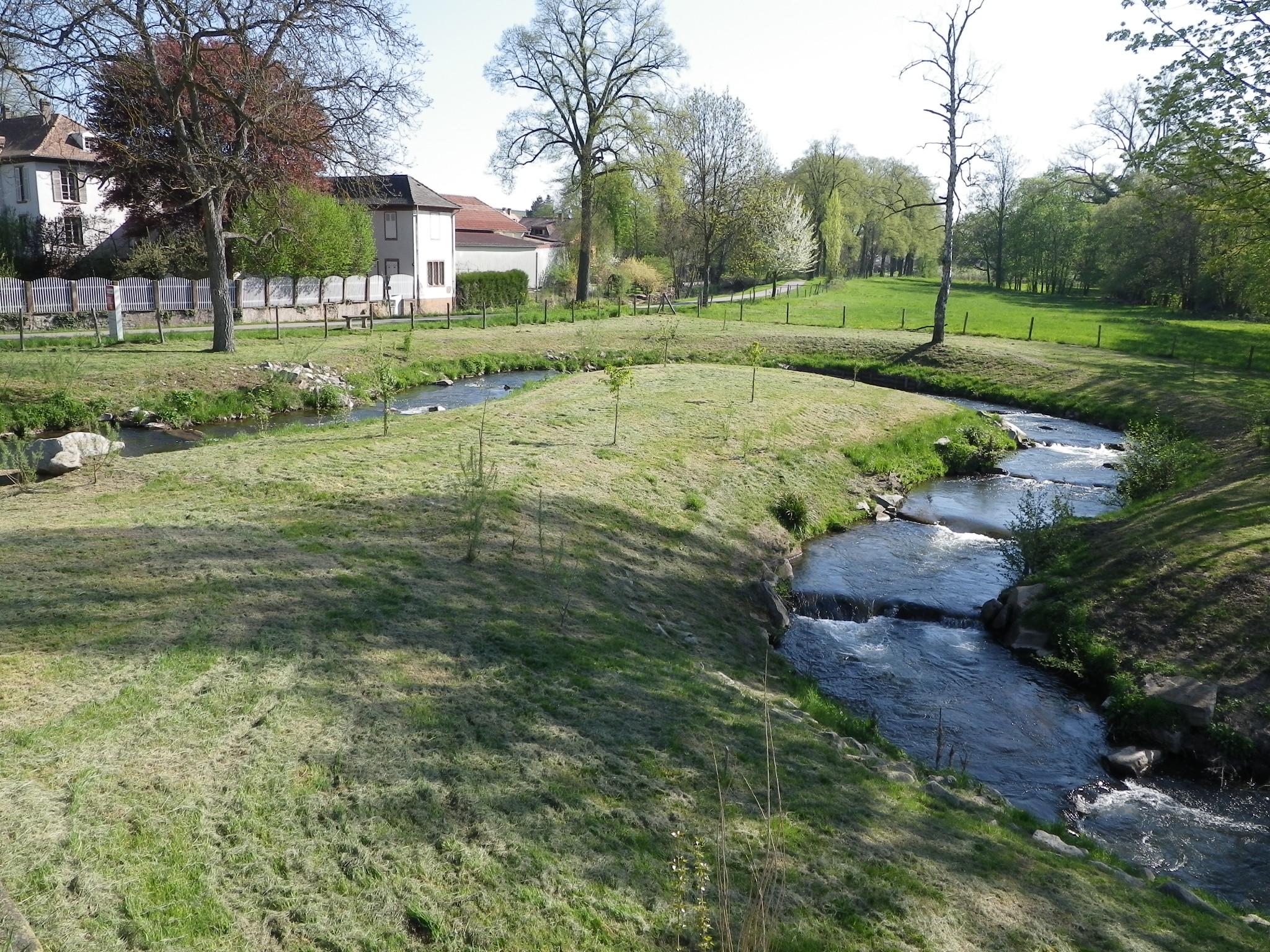 Rivière de contournement avec seuils sur Avolsheim