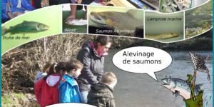 Journée mondiale des poissons migrateurs