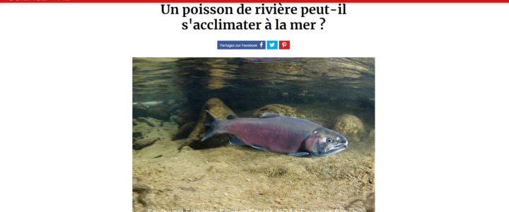 Un poisson de rivière peut-il s'acclimater à la mer?